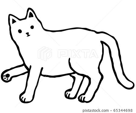 白色貓圖 65344698
