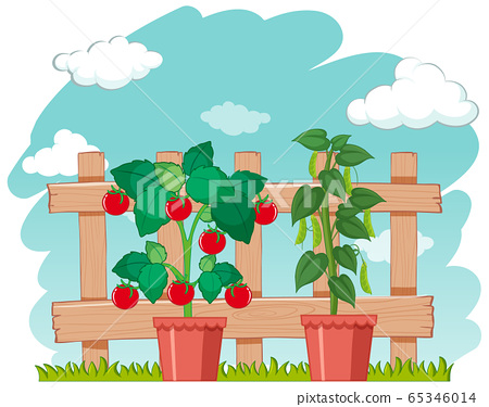Farm scene with fresh vegetables growing 65346014