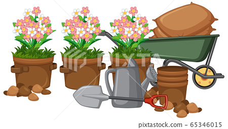 Beautiful flower in clay pots on white background 65346015
