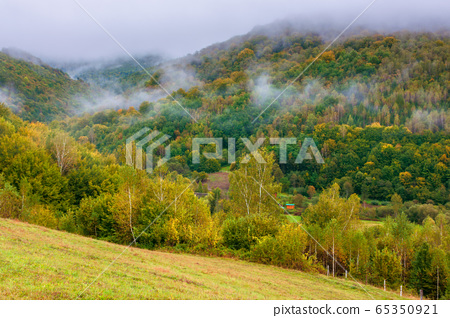 forest on mountain in mist at sunrise 65350921
