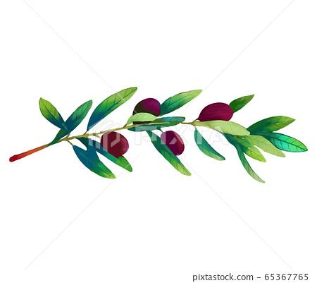 優雅美麗的樹葉和水果花卉插畫 65367765
