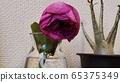 枯萎的玫瑰 65375349