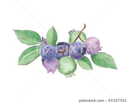 藍莓水彩 65387591