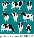 荷斯坦牛肉姿勢集 65388915