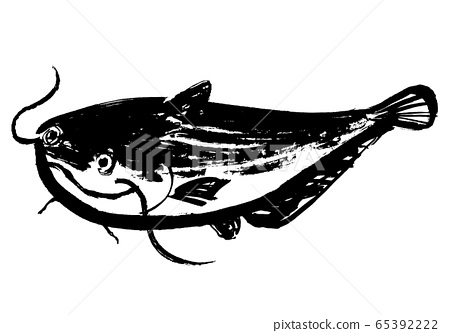 Catfish watercolor 65392222
