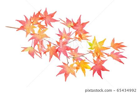 紅色秋葉分支。水彩插圖跟踪矢量 65434992