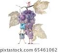 Fairy grape 65461062