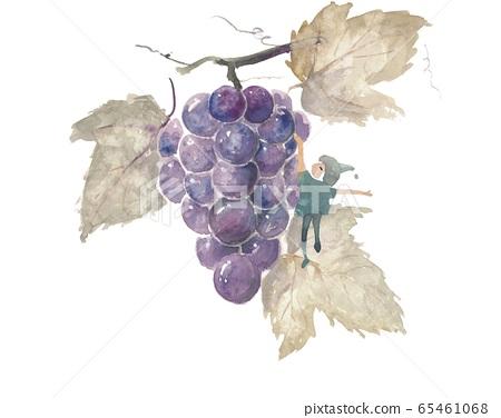 Fairy grape 65461068