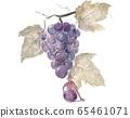 Fairy grape 65461071