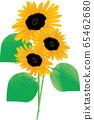 Summer sunflower 65462680