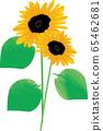 Summer sunflower 65462681