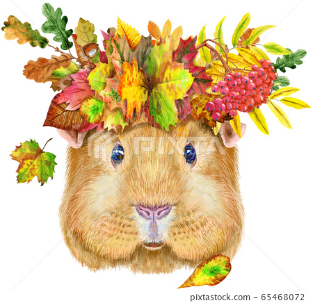Watercolor portrait of Self guinea pig with wreath 65468072