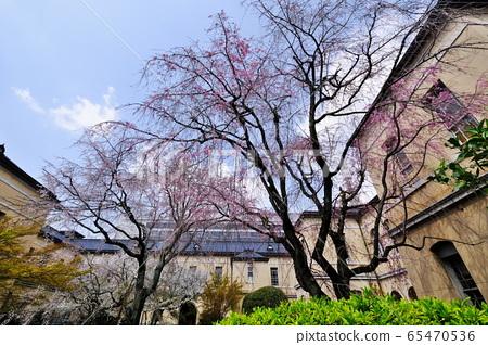 Cherry Blossoms 65470536
