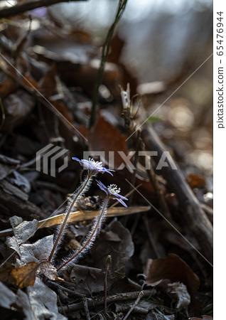 한국의 야생화 65476944