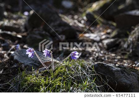 한국의꽃 65477111