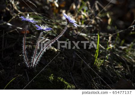 한국의꽃 65477137