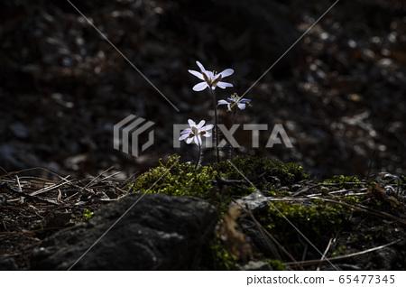 Korean Wild Flowers 65477345