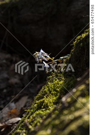한국의 야생화 65477498