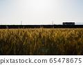 麥田和日落時的火車 65478675
