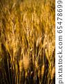 小麥圖像 65478699