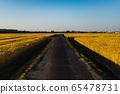 鄉村道路和麥田 65478731