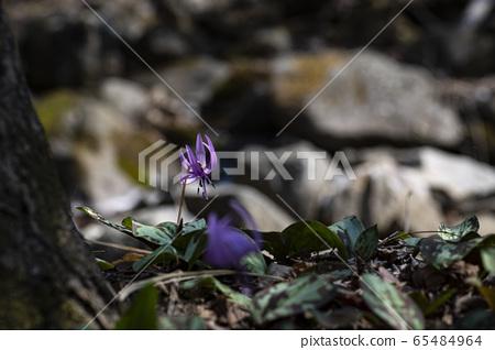 Korean Wild Flowers 65484964