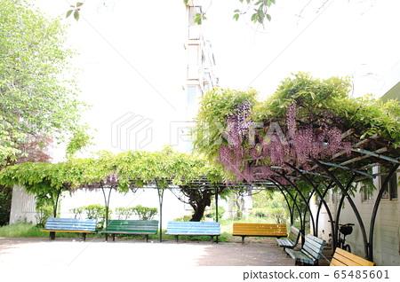 美麗的公寓風光 65485601