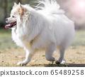 小狗,寵物,狗 65489258