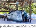 鯨魚,哺乳動物,雕塑 65489259