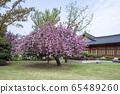 櫻花,春天,Sarangchae 65489260