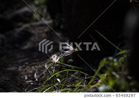 한국의 야생화&들꽃 65489297
