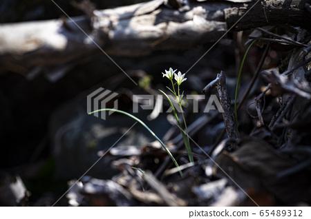 한국의 야생화&들꽃 65489312