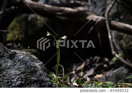 한국의 야생화&들꽃 65489332
