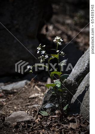 한국의 야생화&들꽃 65489348