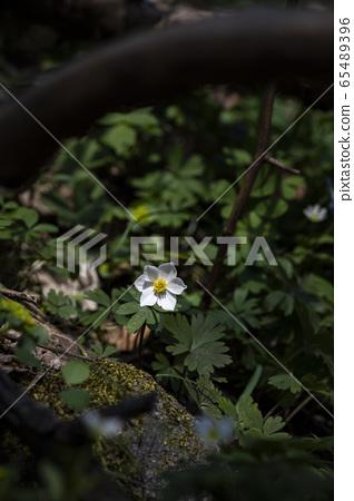한국의 야생화&들꽃 65489396