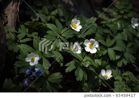 한국의야생화&들꽃 65489417
