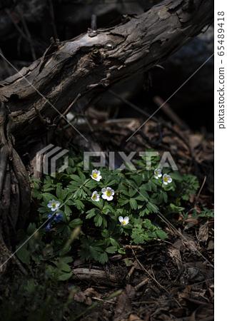 Korean Wild Flowers & Wild Flowers 65489418