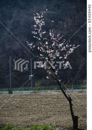 한국의야생화&들꽃 65489440