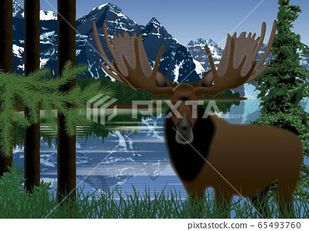 캐나다 숲과 사슴의 일러스트 65493760