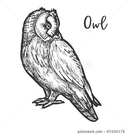 Hand Drawn Vector Burrowing Owl Or Bird Sketch Stock Illustration 65500178 Pixta