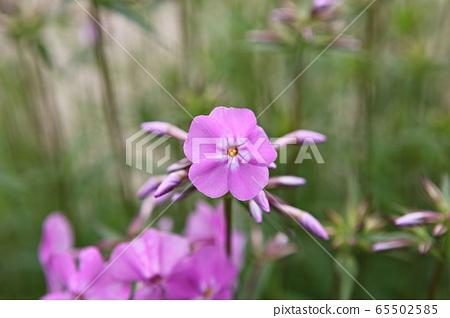 꽃 65502585