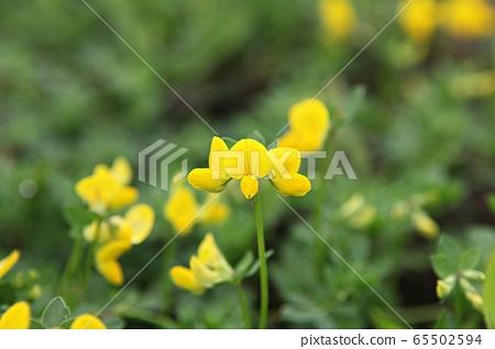 꽃 65502594
