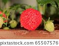 在家庭菜園的草莓 65507576
