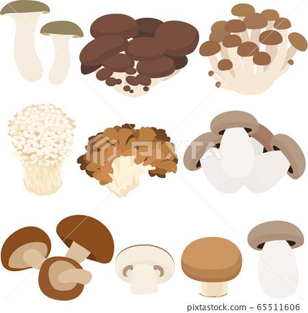 Illustration material mushroom mushroom eringi hiratake mushroom edible mushroom enokitake shiitake autumn vector 65511606