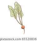 Fresh raw Ripe radish vegetable isolated icon 65520836