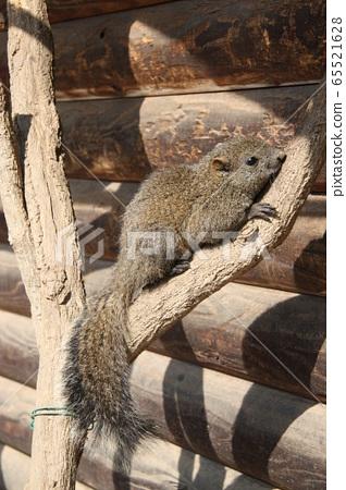 다람쥐 65521628