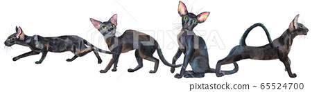 Watercolor border of oriental black cats. Painting 65524700