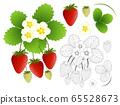 Strawberry, Flower and Outline isolated on White 65528673
