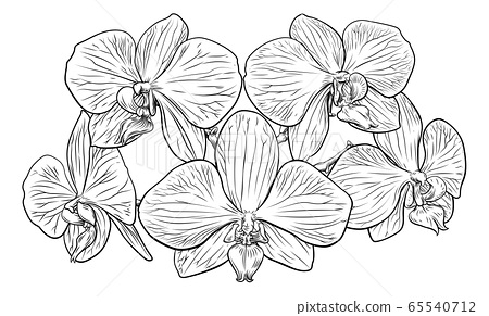Orchid Flower Woodcut Etching 65540712