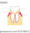 Vector isolated illustration of tooth 65549872